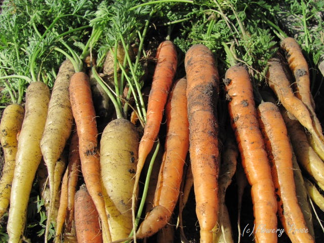 Carrots FP