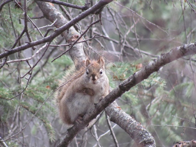 Squirrel FP