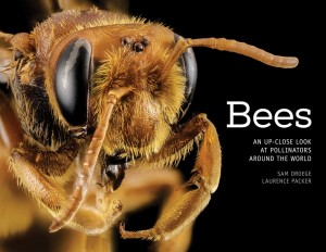 Bees-An-Up-Close-Look-at-Pollinators-Around-the-World-600x464