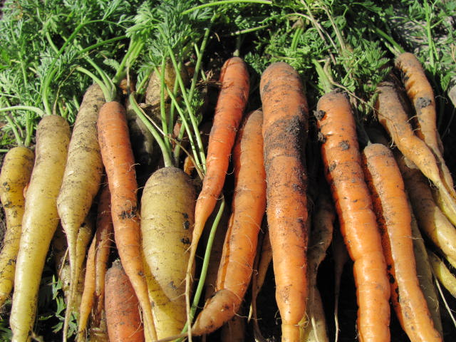 Carrots_Normandeau