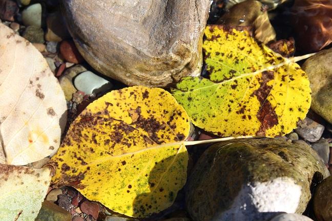 leafandrockfp