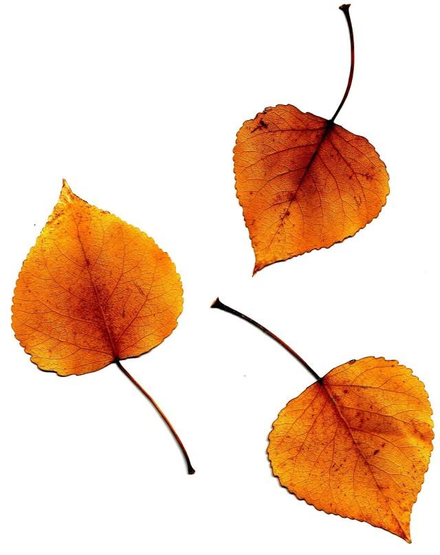 leaves0003
