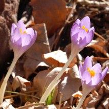 A taste of Spring 2012- March 14th- Janet Melrose